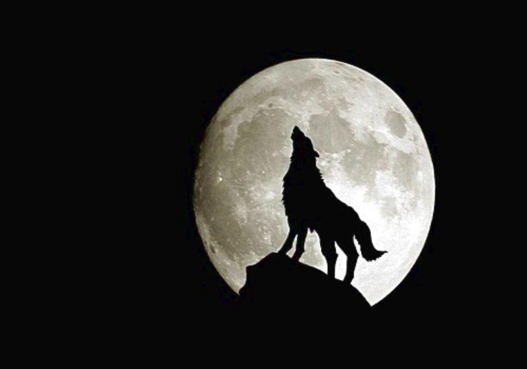 Dalla bellezza all'amore…ecco come la Luna agisce su di noi